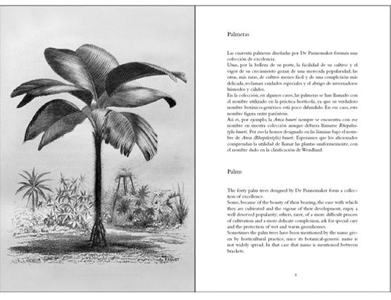 Palmeras - Palm Trees - Les palmiers - Palmen