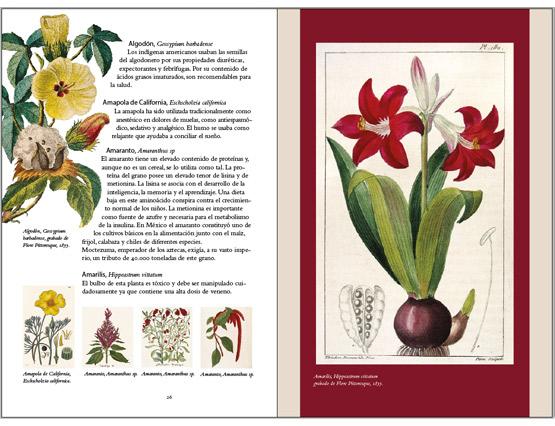 Sabiduría tradicional de plantas americanas