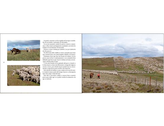 Viviendo entre ovejas